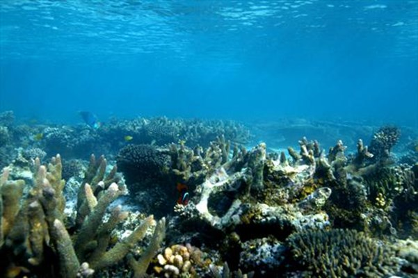 Tourism - Coral of Ningaloo